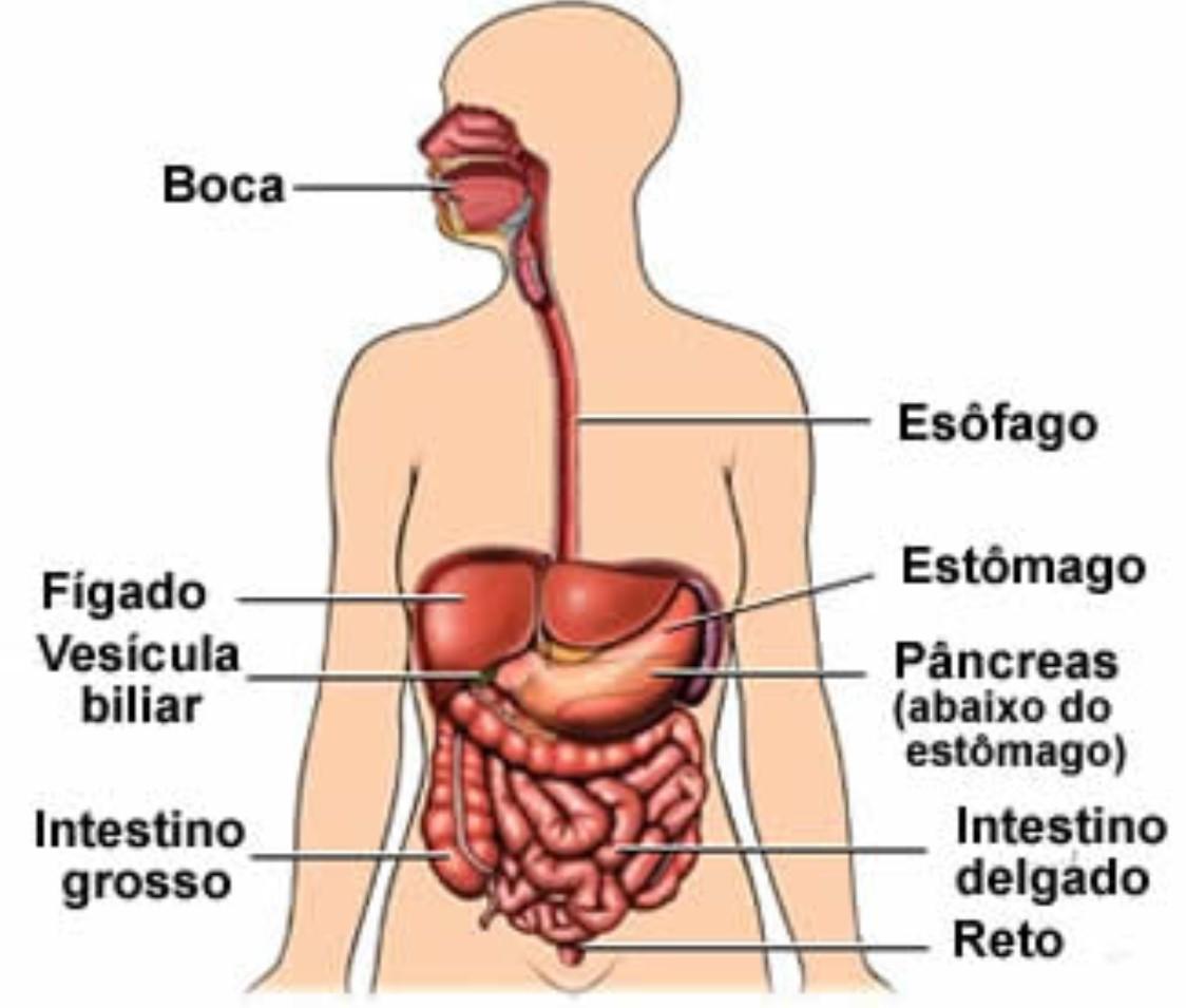 Qual a origem do barulho no estômago ? | Alô FM - Radio Alô