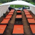 Mineiro desenvolve método de cultivo de minhocas em caixas