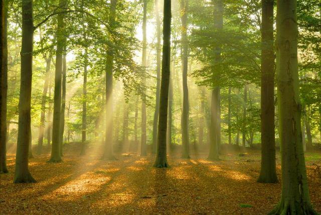 Plantar árvores é o melhor jeito de combater o aquecimento global