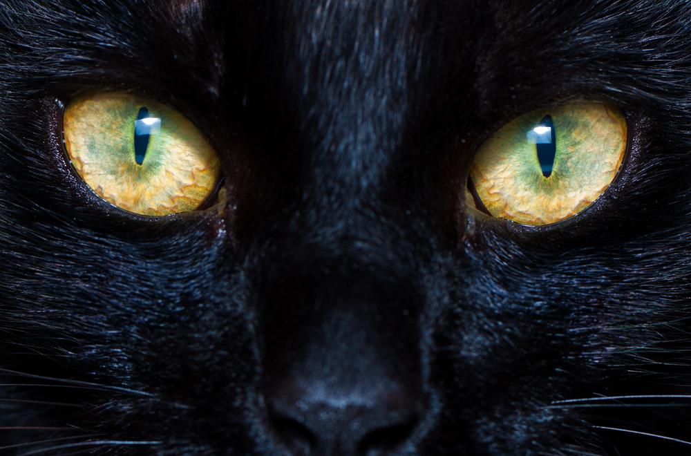 gato.invisible