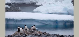 Aquecimento e degelo pararam na Antártida, revela estudo