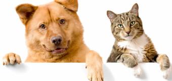 Abandonar e agredir cães e gatos poderá virar crime no Brasil