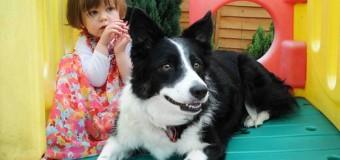 Cão fareja câncer em menina. Alerta precoce salvou a vida dela