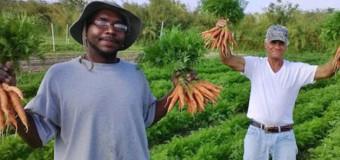 Horta orgânica só contrata moradores de rua: incentivo