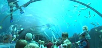 Rio de Janeiro terá maior aquário da América do Sul: neste ano