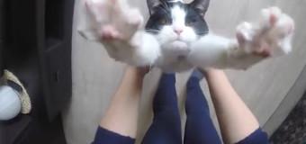 Gato quer abraço toda hora, depois que foi adotado: assista!