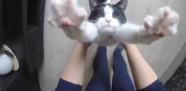 gato-abracos