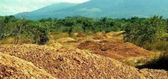Cascas de laranja fazem floresta renascer em área desmatada