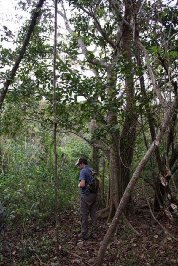 cascas-laranja-floresta-2