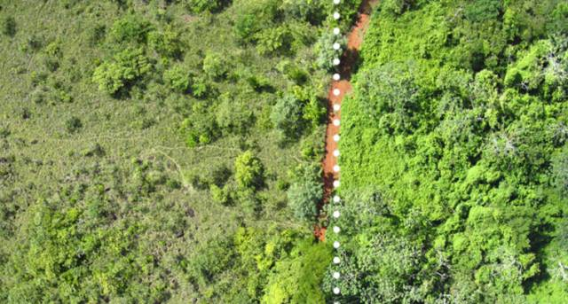 cascas-laranja-floresta-3